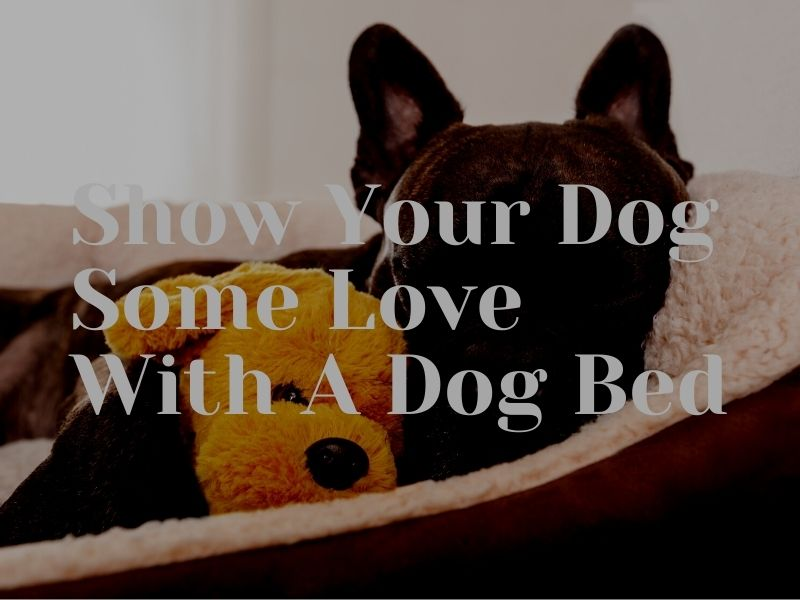 Show Your Dog Some Love With A Dog Bed