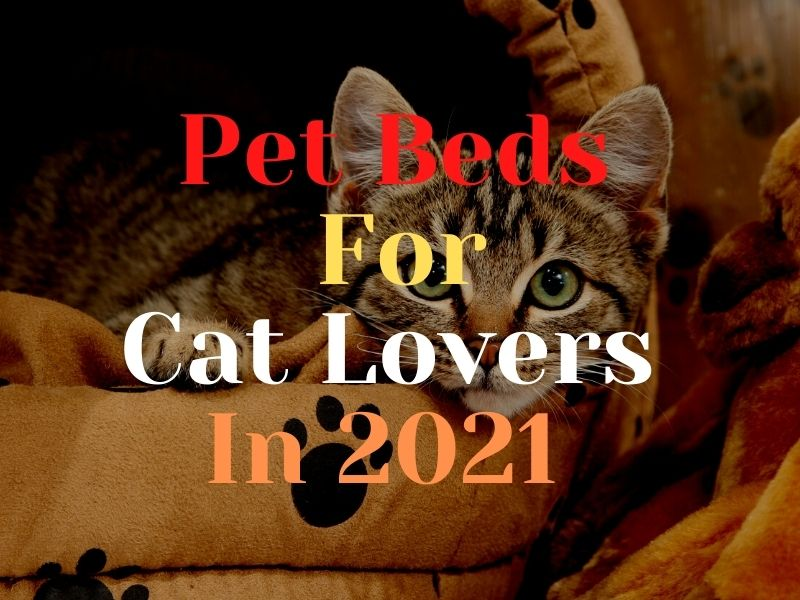 Pet Beds For Cat Lovers In 2021